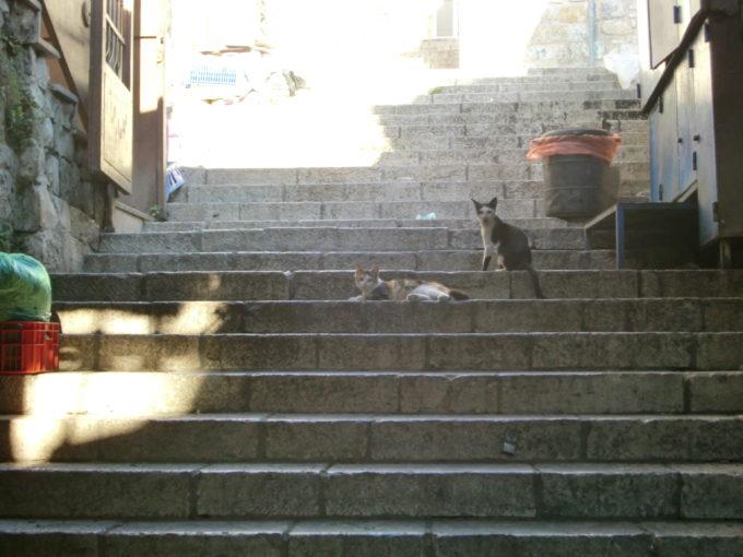 階段でくつろぐ猫たち