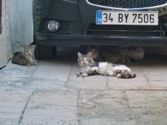 車の下で転がる3匹の猫