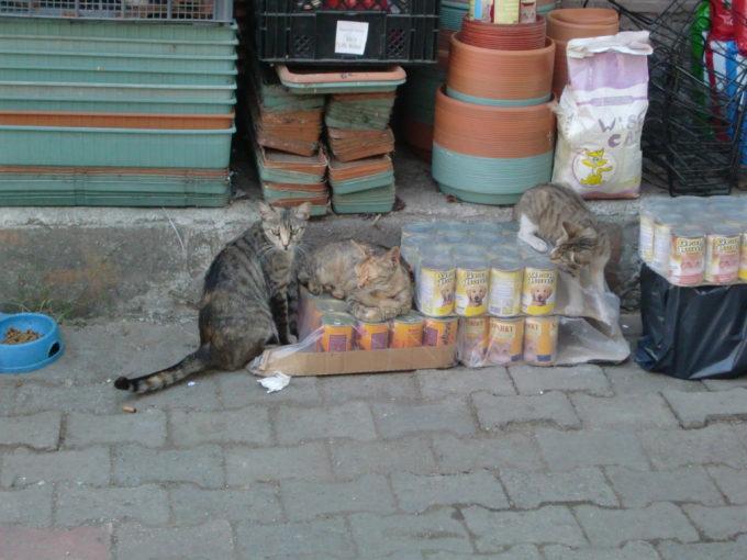 道路でくつろぐ3匹の猫