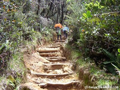 キナバル登山道