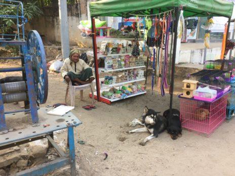 ニャウンウー村の犬と販売員